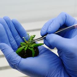بیوتکنولوژی گیاهان دارویی