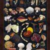 قارچ های دارویی Medicinal Mushroom