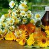 داروهای گیاهی تجارت سازی