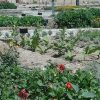باغ گیاهان دارویی کلکسیون گیاهان دارویی