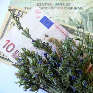 تجارت بازار گیاهان دارویی