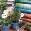کتاب طب سنتی گیاهان دارویی