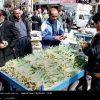 گیاهان دارویی در حال انقراض کرمانشاه