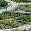 باغ گیاهان دارویی کلکسیون گیاهان دارویی هربوراتوم (1)