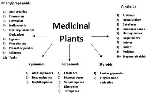طبقه بندی گیاهان دارویی بر اساس مواد موثره
