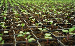 نشای گیاهان دارویی