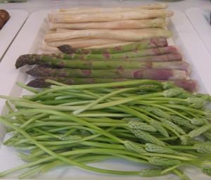 مارچوبه Asparagus officinalis