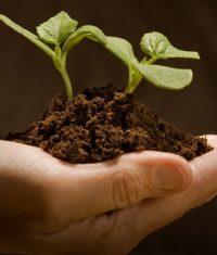 کشاورزی پایدار ارگانیک کود سبز تولید نشا گیاهان دارویی