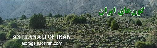 دکتر علی اصغر معصومی. گون های ایران 2