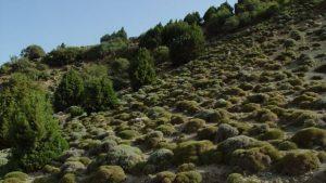 مرتع طبیعت کوه گون کتیرا برداشت از منابع طبیعی (1)