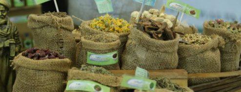 جشنواره نمایشگاه گیاهان دارویی