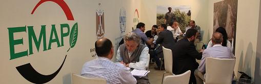 پروژه گیاهان دارویی و معطر مصر 1