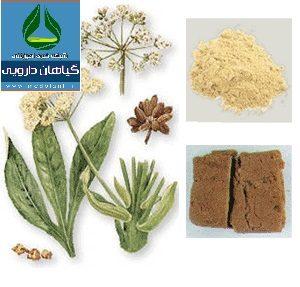 معرفی گیاه آنغوزه Ferula assa-foetida