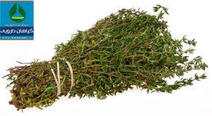 آویشن باغی Thymus vulgaris
