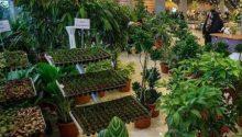 نمایشگاه گل گیاه دارویی
