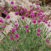 گیاهان دارویی مرتع کوه