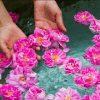 گل محمدی و گلاب