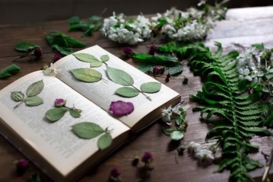 هرباریوم دیجیتال گیاهان دارویی و معطر