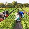 مزرعه گیاهان دارویی اشتغال