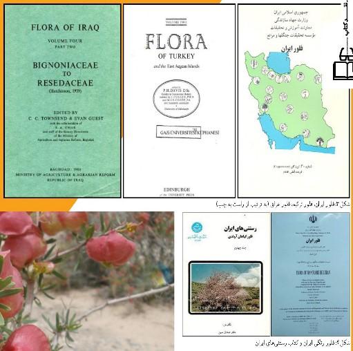 فلور ایران