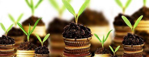 سرمایه گذاری و درآمدزایی در کار گیاهان دارویی