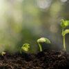 تکثیر گیاهان